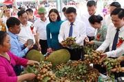 7 tháng đầu năm, Sông Mã xuất khẩu 80 tấn nhãn sang Trung Quốc
