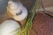 Hải Phòng chọn gạo ruộng rươi tham gia chương trình TOP đặc sản Việt Nam 2020