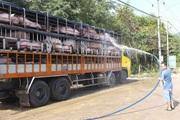 Một doanh nghiệp đang nhập 1.000 con heo thịt về Việt Nam