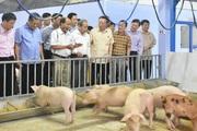 Phó Chủ tịch Quốc hội tham quan trang trại lợn dùng công nghệ 4F tiên tiến nhất thế giới tại Huế