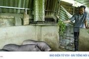 Điện Biên: Dịch tả lợn châu Phi tái phát tại nhiều xã, dân mất hàng trăm triệu đồng