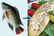 7 loại cá mà bạn nên hạn chế ăn, loại thứ 4 rất nhiều người vẫn ăn thường xuyên