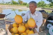 """Thanh Hóa: U70 trồng """"vườn vàng"""", đã thu hàng trăm triệu, sểnh ra là có người đòi vào """"sống ảo"""""""