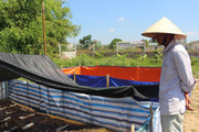 Hà Tĩnh: Thạc sỹ bỏ về quê nuôi ếch trong vườn, thò tay xuống bắt toàn con to
