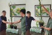 Bắt ổ nhóm lừa đảo bán lan đột biến tiền tỷ ở Nghệ An