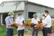Hà Tĩnh: Thuê bãi đất cát hoang, ven nghĩa địa nuôi gà mà ra tiền tỷ, ai cũng khen tài