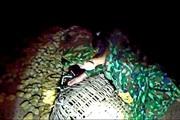 Lạng Sơn: Bắt 2.000 gà giống nhập lậu qua đường mòn vào Việt Nam