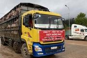 Thêm 1.000 lợn thịt được nhập về Việt Nam