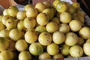 Chanh leo ngọt như mật, giá đắt gấp 3 chị em vẫn gom  mua chung cả tạ
