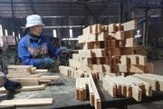 Đã có quy định về hệ thống đảm bảo gỗ hợp pháp, không còn cửa cho gỗ lậu