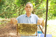 Nuôi ong dưới tán cây vải, chăm nhàn mà mỗi năm ông nông dân tỉnh Nghệ An vẫn thu hơn trăm triệu đồng