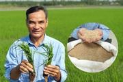 """Một nông dân tỉnh Vĩnh Long trồng thứ lúa gì mà bán giá """"trên trời"""" các doanh nghiệp vẫn tranh mua?"""