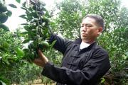 """Hà Giang: Tỷ phú nông dân người Mông xây nhà đẹp, mua xe hơi nhờ trồng cây đặc sản, bắt đất """"nhả vàng"""""""