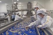 Nhà máy chế biến hoa quả tươi hiện đại nhất Tây Bắc chuẩn bị hoạt động