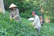 Thái Nguyên: Nơi duy nhất miền núi phía Bắc không còn xã dưới 10 tiêu chí