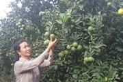 Ước mơ nhiều đời của nông dân Sơn La đang trở thành hiện thực