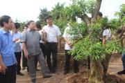 Thái Bình: Ở nơi này, nông dân làm giàu nhờ trồng cây đào