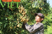 Yên Châu nỗ lực giảm nghèo nhanh và bền vững