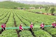 Hội nghị thúc đẩy cơ cấu ngành nông nghiệp được tổ chức tại Sơn La