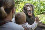 Phản ứng bất ngờ của tinh tinh lọt top ảnh động vật ấn tượng tuần qua