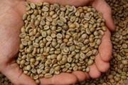 Cà phê Việt Nam nhập vào Trung Quốc: Lượng nhiều nhất, giá thấp nhất