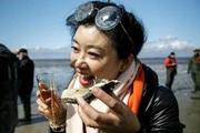 """Đan Mạch mời du khách Trung Quốc sang ăn hàu để """"giải cứu bờ biển"""""""