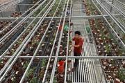 Vườn trồng toàn lan đột biến trị giá hơn 60 tỷ ở Cần Thơ quy mô và hoành tráng thế nào?