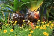 Tết Tân Sửu: Biến quả dừa khô thành bonsai hình trâu, giá tiền triệu mà khách đặt mua tới tấp