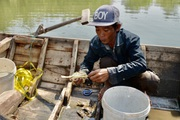 Bà Rịa-Vũng Tàu: Đáng mừng, dân đã bắt được vô số cá tôm trên sông Thị Vải, kiếm 500.000 đồng mỗi ngày