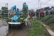 Đà Nẵng: Nông dân thích thú xem máy cấy mạ khay chạy vèo vèo, loáng cái đã cấy xong ruộng