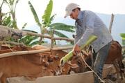 Hội Nông dân Nặm Ét: Nhiều hoạt động giúp hội viên, nông dân phát triển kinh tế