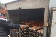 """Mùng 4 Tết gặp """"siêu"""" nông dân tuổi Sửu nuôi hàng vạn con gà Ai Cập, vì dịch Covid-19 tồn 600.000 quả trứng"""