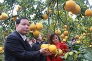 """Bắc Giang: Choáng ngợp những vườn cây """"đẻ"""" tiền tỷ ở Lục Ngạn, thì ra là nhờ cây làm giàu này"""