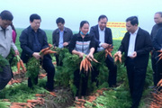 Nông sản bị ngăn sông cấm chợ do dịch Covid-19, Chủ tịch Hải Dương 'kêu cứu'
