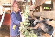 Một phụ nữ Thái chia sẻ cách nuôi con biết ăn cả lá ngón