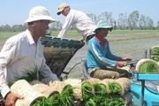 Các hợp tác xã giúp nông dân vượt qua khủng hoảng, ngược lại còn hoạt động mạnh hơn