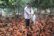 Thái Bình: Linh hoạt giải pháp hỗ trợ nông dân làm kinh tế