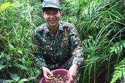 Bắc Giang: Leo núi, vô rừng săn loài ốc trước kia nướng ăn chống đói, nay nhặt về làm món đặc sản đắt tiền