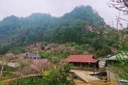 Sơn La: Người H'Mông - Lóng Luông ví hoa đào là biểu tượng cho bản làng
