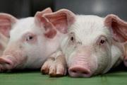 Giá nông sản hôm nay 22/2: Lợn hơi cao nhất 79.000 đồng/kg, cà phê đi ngang