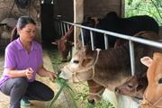 Người dân Tô Múa có của ăn của để từ chăn nuôi đại gia súc