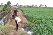 Đồng Nai: Thời tiết cực kỳ thuận lợi, bà con nông dân Xuân Lộc, ai ai cũng đều tích cực ra đồng sản xuất