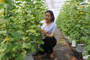 """Bắc Ninh: """"Nở rộ"""" tổ nhóm liên kết sản xuất hiệu quả nhờ gắn kết từ Quỹ Hỗ trợ nông dân"""