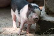 Giá nông sản hôm nay 25/2: Lợn hơi giảm 2.000 đồng, tiêu tăng mạnh