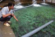 Chặn khe, đắp bờ, nông dân Tuần Giáo khấm khá nhờ nuôi cá