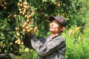 Dịch covid-19 hoành hành, ngành nông nghiệp Sơn La vẫn tăng trưởng cao hơn so với cả nước