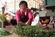 Lâm Đồng: Đánh liều phá cà phê trồng măng tây, mỗi ngày thu 400kg, bán cho thương lái 60.000 đồng/kg