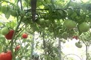 Tết ấm của mẹ đảm Hà Nội trồng rau sạch, nuôi gà ngon trên sân thượng bé hin hin
