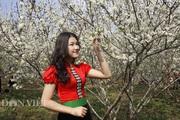 Sơn La: Những đồi hoa mận nở trắng trời, đẹp mê li ngỡ như lạc vào nơi tiên cảnh