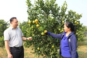 Hoà Bình: Sản xuất hàng hoá là đòn bẩy nông nghiệp